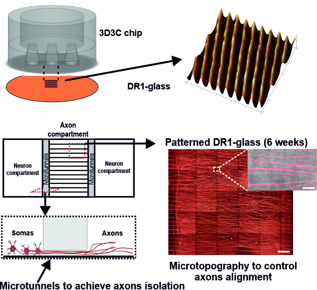 The structure of the 3D3C chip is presented